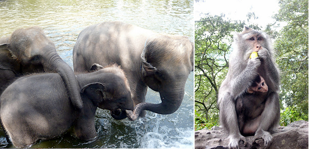 bali elephants and monkeys