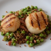 Seared Scallops with Bacon, Peas, and Red Quinoa